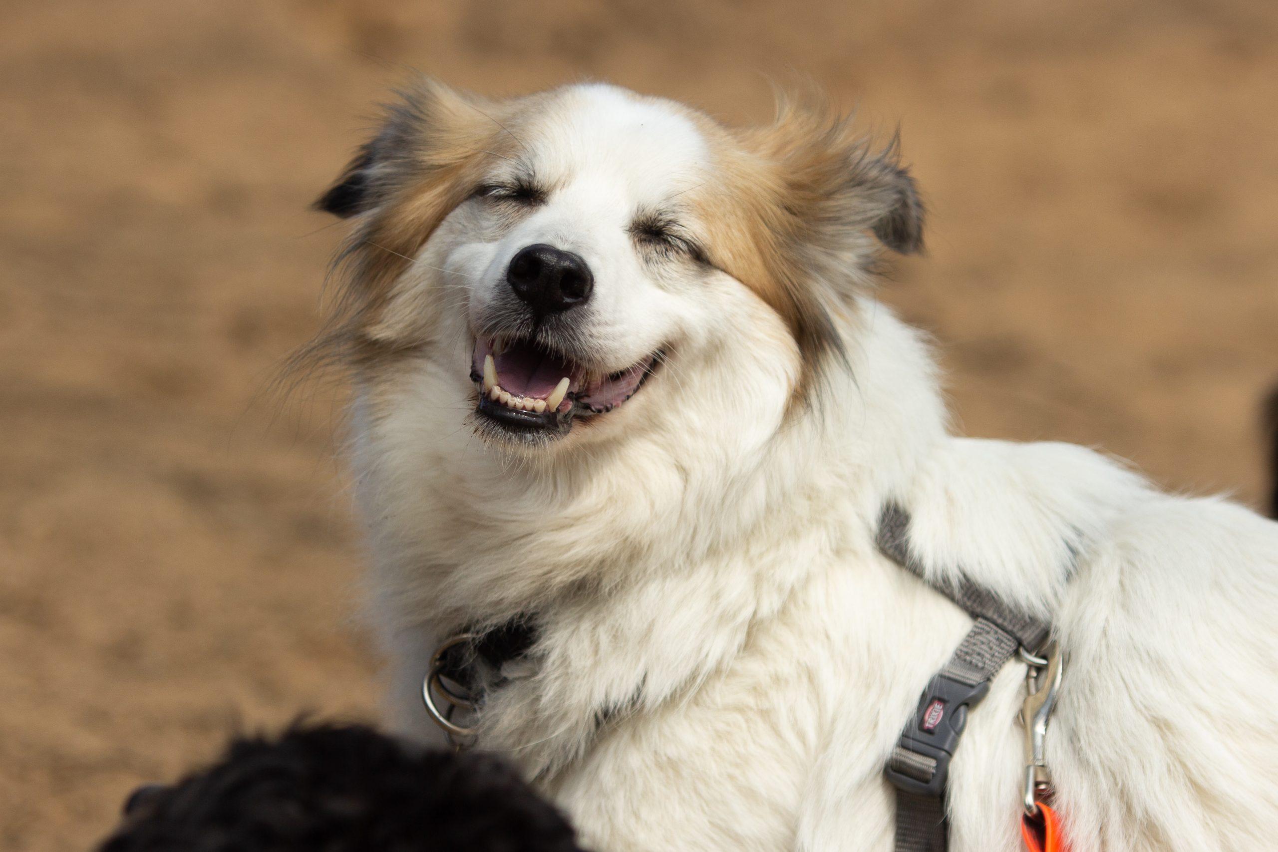 Traumatisierter Hund Miko kehrt zurück ins Leben
