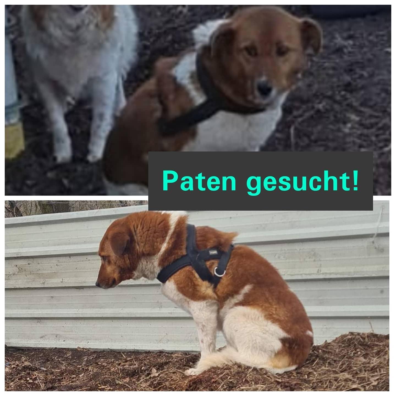 Read more about the article Paten gesucht für unsere Rozi